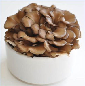 Maitake mushroom extract plays an important role in the immune support provided by Immuno-EX